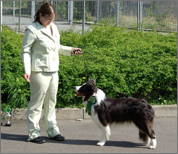 Vici und Border Collie Silver